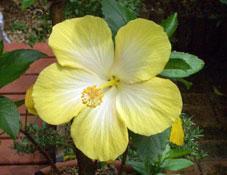 Flower07021