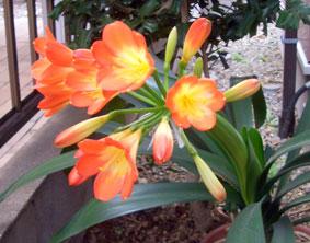 flower_0419_2
